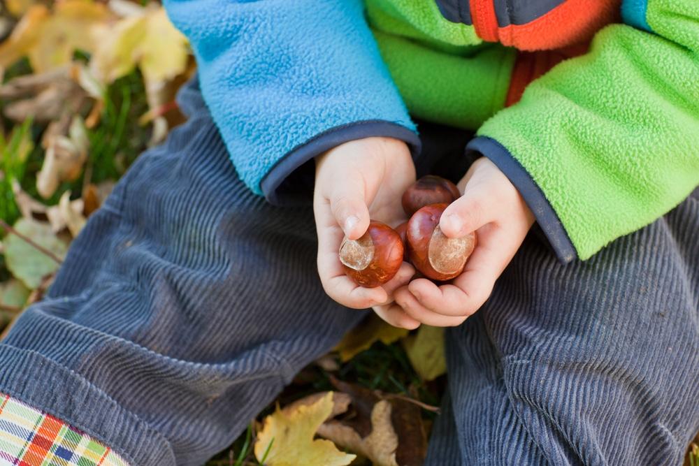 Chataignes dans les mains d'un enfant