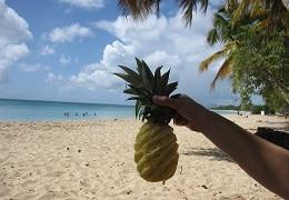 ananas plage