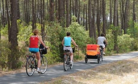 Gironde, cycliste dans la forêt des Landes
