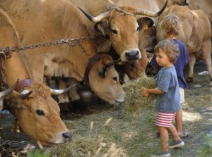 Enfants et vaches à la ferme