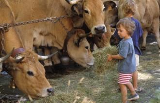 Enfants et vaches à la ferme 700px