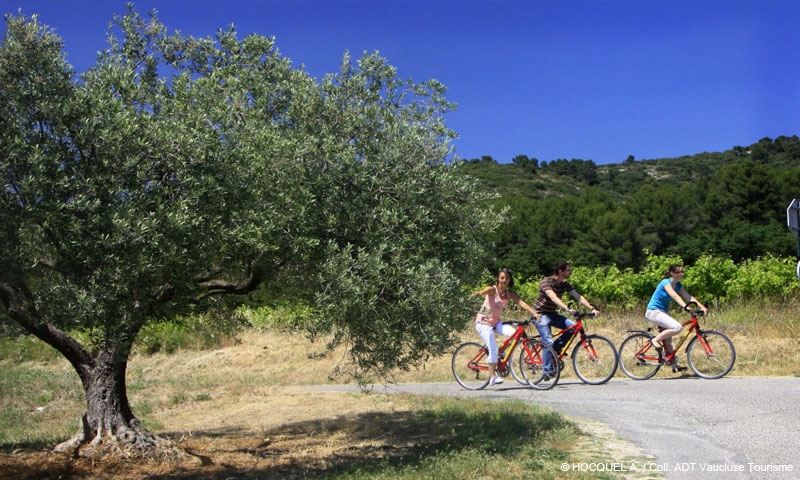 vaucluse tourisme famille