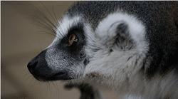 Réserve zoologique de Calviac retaillée