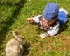 le Hameau du sentier bébé lapin