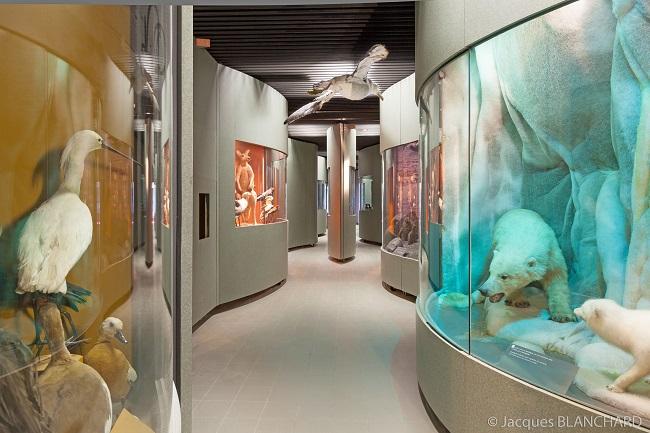 Museum histoire naturelle de Dijon