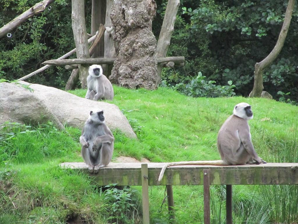 zoo tregomeur