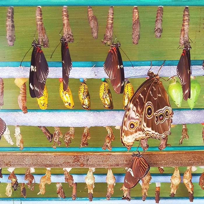 Visiter une serre à papillons